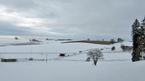 Landschaft Reitstall Holzerhof