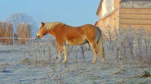 Pferdepension Holzerhof mit großzügigen Weiden