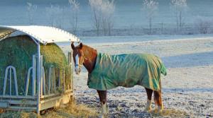 Pferdepension Holzerhof setzt auf artgerechte Haltung