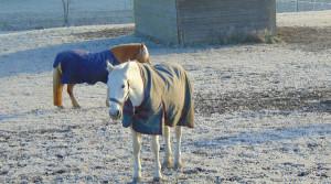 Pferdepension Holzerhof mit großzügigen Winterweiden