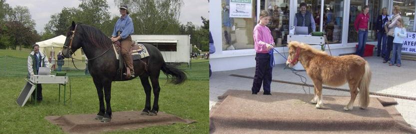 Bayerns Pferdewaage