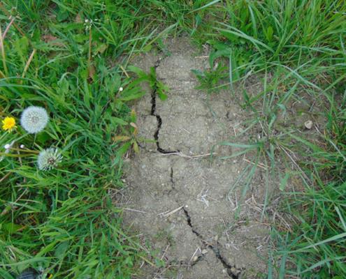Trockener Boden auf dem Grünland